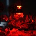 Super Reptile Red 50W podczerwona żarówka grzewcza
