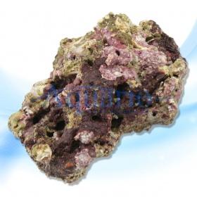 Żywa skała z Indonezji
