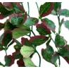 <b>Repti-Zoo roślina wisząca bluszcz czerwony 40cm</b><br /><br /><p><span>Sztuczne rośliny producentaRepti-Zoo doskonale sprawdzają się w każdym rodzaju terrariów, tworząc miejsca zacienione oraz miejsca kryjówek. Główną zaletą tego produktu jest jego naturalny wygląd oraz brak jakiej kolwiek trudności w utrzymaniu takiej rośliny.</span></p>