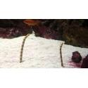 Żywy Piasek Bio-Active Live Samoa Pink 9kg