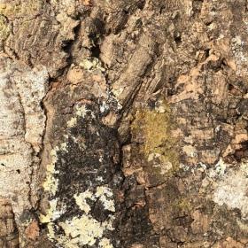Tło z kory dębu korkowego do terrarium 20 x 20