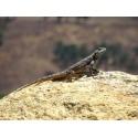 Repti-Zoo Jaskinia kamienno-gliniana 14x10x6cm