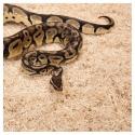 Repti-Zoo Aspen Snake Bedding - podłoże włókna topoli 500g