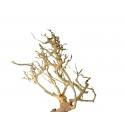 Korzeń dekoracyjny Drift Wood