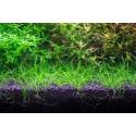 NEO Soil Shrimp 3l - podłoże do krewetkariów