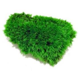 <b>Silent Moss - Mech żywy porcja 9 x 6 cm 10g</b><br /><br />&lt;p&gt;Jest to całkowicie bezobsługowy produkt, który nie wymaga podlewania, naważania, przycinania. Nie wymaga także światła. Mech został odpowiednio spreparowany nie rośnie i nie ulega zmianom koloru czy struktury. Nadaje się do terrarium suchego i wilgotnego oraz wiwarium czy paludarium.&lt;/p&gt;