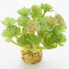<b>Yusee Roślina - Drzewko Szczęścia 12x9x11</b><br /><br /><p>Rośliny sztuczne Yusee są jednymi z najładniejszych na rynku, dzięki ręcznej końcowej fazie produkcji. Spektakularny końcowy efekt wizualny dopełnia wyjątkowa struktura naturalny kształt i mocne żywe kolory.<br />Produkty Yusee charakteryzują się niezwykłą wytrzymałością oraz odpornością na działanie wody i wysokiej temperatury.</p>