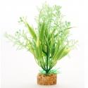 Yusee Roślina - Alternanthera Red + Green 25cm
