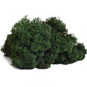 <b>Secret Live Moss Dark Green - Mech Żywy porcja 5g</b><br /><br />&lt;p&gt;Jest to całkowicie bezobsługowy produkt, który nie wymaga podlewania, naważania, przycinania. Nie wymaga także światła. Mech został odpowiednio spreparowany nie rośnie i nie ulega zmianom koloru czy struktury. Nadaje się do terrarium suchego i wilgotnego oraz wiwarium czy paludarium.&lt;/p&gt;