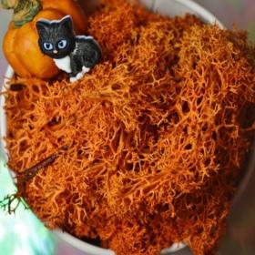 Secret Live Moss Deep Orange - Mech Żywy porcja 5g