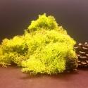 Secret Live Moss Sunflower Yellow - Mech Żywy porcja 5g