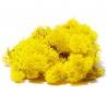 <b>Secret Live Moss Sunflower Yellow - Mech Żywy porcja 5g</b><br /><br /><p>Jest to całkowicie bezobsługowy produkt, który nie wymaga podlewania, naważania, przycinania. Nie wymaga także światła. Mech został odpowiednio spreparowany nie rośnie i nie ulega zmianom koloru czy struktury. Nadaje się do terrarium suchego i wilgotnego oraz wiwarium czy paludarium.</p>