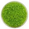 <b>Roślina InVitro - Hemianthus Cuba</b><br /><br /><p>Popularna roślina trawnikowa. Szybko tworzy gęsty zielony dywan na podłożu akwarium. Wymaga dobrego oświetlenia, nawożenia oraz dawkowania CO2. Polecana jedynie doświadczonym akwarystom.</p>