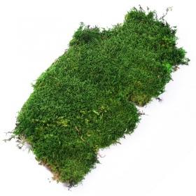 Silent Forest Moss - Mech żywy płaski