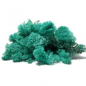 <b>Secret Live Moss Sky Blue - Mech Żywy porcja 5g</b><br /><br />&lt;p&gt;Jest to całkowicie bezobsługowy produkt, który nie wymaga podlewania, naważania, przycinania. Nie wymaga także światła. Mech został odpowiednio spreparowany nie rośnie i nie ulega zmianom koloru czy struktury. Nadaje się do terrarium suchego i wilgotnego oraz wiwarium czy paludarium.&lt;/p&gt;