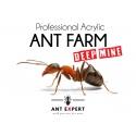 Ant Expert Deep Mine - formikarium akrylowe profesjonalne