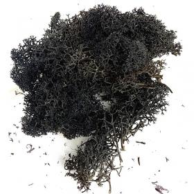 Secret Live Moss Black - Mech Żywy porcja 5g