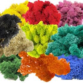 Secret Live Moss Colour Mix - mech żywy 100g