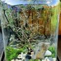Urban Jungle - Borneo L H42 - słoik z przykrywką korkową