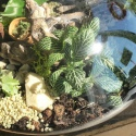 Urban Jungle - Costa Rica M H26 - słoik z przykrywką korkową