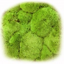 Natural Forest Moss - prawdziwy mech naturalna zieleń