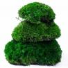 """<b>Natural Forest Moss - prawdziwy mech ciemna zieleń</b><br /><br /><p>Duża kępka prawdziwego mchu leśnego, pochodzącego z północnych terenów Kanady. Pochodzi z legalnych odnawialnych hodowli. Mech jest """"wiecznie żywy"""", co oznacza, że nie wymaga światła, podlewania i innych czynności pielęgnacyjnych.Pomimo braku pielęgnacji, mech nie zmieni koloru, struktury czy kształtu.</p>"""