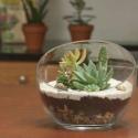 Urban Jungle - Ayers Rock Jar - wazon szklany 16cm