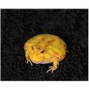Repti-Zoo Ceratophrys Mud 600g - podłoże dla żab rogatych