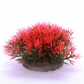 Yusee Roślina - Color Grass Red / Green wys. 4-6cm