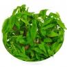 <b>Eco Plant - Crassula Helmsii - InVitro duży kubek</b><br /><br /><p>Roślina wyjątkowo rzadka w sprzedaży. Posiada silne i długie łodygi oraz twarde liście od 4 do 24mm. Może rosnąć całkowicie o zanurzona ona lub poza wodą na wilgotnym podłożu. Odporna na każde warunki. Odporna na mrozy. Ilość sadzonek roślin w kubku 14 - 50szt.</p>