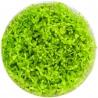 <b>Eco Plant - Hemianthus Micranthemoides - InVitro duży kubek</b><br /><br /><p>Drobnolistna roślina o jasno zielonym kolorze. Roślina idealnie nadaje się na gęsty trawnik, a także na trzeci plan. Ma wszechstronne zastosowanie i dobrze znosi częste przycinanie. Roślina jest średnio wymagająca, polecana początkującym.<span>Ilość sadzonek roślin w kubku 14 - 50szt.</span></p>