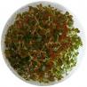 <b>Eco Plant - Ludwigia Super Mini Red - invitro mały kubek</b><br /><br /><p>Ludwigia Super Mini Red to roślina o drobnych okrągłych liściach, które mogą przybierać różne ubarwienie w zależności od parametrów wody. Roślina jest łatwa w utrzymaniu i dedykowana na drugi plan lub trzeci w nano zbiornikach.</p>
