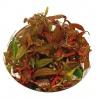 <b>Eco Plant - Ludwigia Guinea - Invitro mały kubek</b><br /><br /><p>Ludwigia Guinea to kolorowa (z przewagą koloru czerwonego) łodygowa roślina, przeznaczona dla hodowcy, który spodziewa się łatwego i bezproblemowego utrzymania roślinki. Roślina odrobnych okrągłych liściach, które mogą przybierać różne ubarwienie w zależności od parametrów wody.Wysoka wzrostem, dedykowana jest na drugi lub trzeci plan.</p>