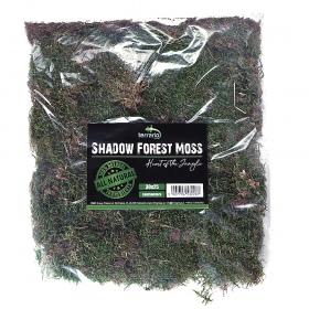 Terrario Shadow Fores Moss - mech naturalny 30x25cm