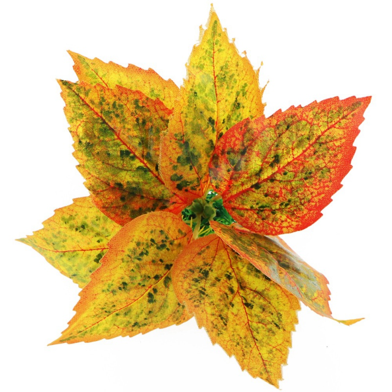 Bello Plant - Golden Polish Autumn Birch- roślina M do obrazów 3D