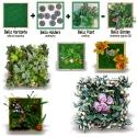 Bello Plant - White Natural Seed - roślina XL do obrazów 3D