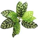 Bello Plant - Fishbone - roślina XL do obrazów 3D