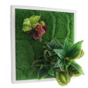 Bello Plant - Green Hearts - roślina XL do obrazów 3D