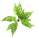 Bello Plant - Snake Plant - roślina XL do obrazów 3D
