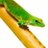 <b>Tropical Forest - Vietnam Bamboo - bambus naturalny</b><br /><br /><p>Naturalny bambus pochodzący z upraw na terenie Wietnamu. Długie łodygi, mogą być dowolnie przycinane. Tworzą świetną przestrzeń do wspinaczek dla wszystkich gatunków gadów i płazów nadrzewnych, a także niektórych ssaków i wszystkich ptaków. Zachowuje swój kształt i nie zmienia go pod naporem nawet najcięższych zwierząt. Jest całkowicie wodoodporny.</p>