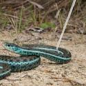 Repti-Zoo Stainless Snake Hook - metalowy hak na węże max 2kg